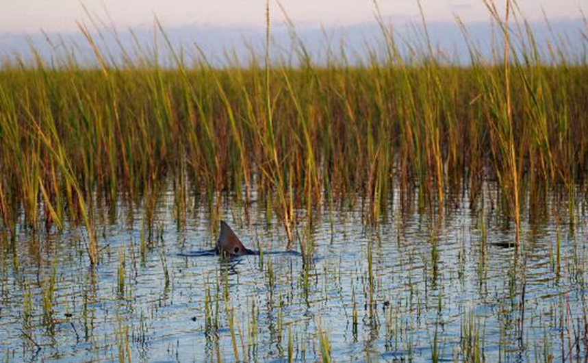 More expert tips redfish and fly fishing coastal georgia for Outer banks fly fishing